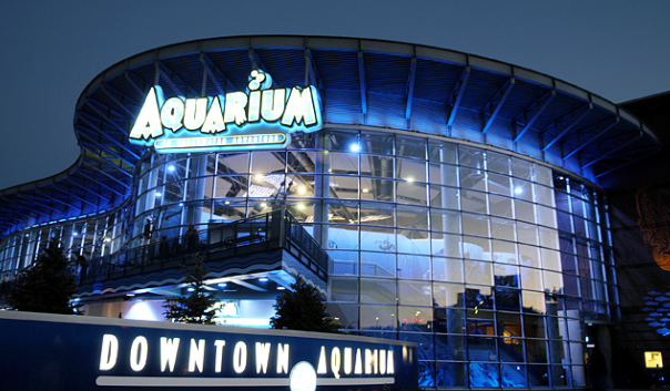 XO Tour Life: Denver has the best aquarium in the history ofwater